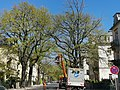 Stieleichen pohlandstraße Dresden 2020-04-20 3.jpg