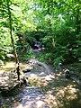 Stream, Big Wood - geograph.org.uk - 843924.jpg