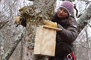 Northern flying squirrel - Installation of a new squirrel box off the Blue Ridge Parkway.