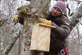 Northern flying squirrel - Installation of a new squirrel box off the Blue Ridge Parkway
