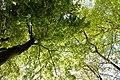 Sunny Tree (33621565).jpeg