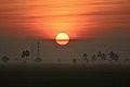 Sunrise on paddy fields near Eluru (4).jpg