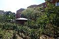 Suresnes - Jardins familiaux (11).JPG