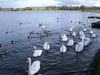 Hogganfield - Image: Swan Lake, aka Hogganfield Loch geograph.org.uk 123438