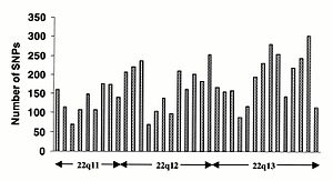 Human genome - TSC SNP distribution along the long arm of chromosome 22 (from http://snp.cshl.org/ ). Each column represents a 1 Mb interval; the approximate cytogenetic position is given on the x-axis. Clear peaks and troughs of SNP density can be seen, possibly reflecting different rates of mutation, recombination and selection.