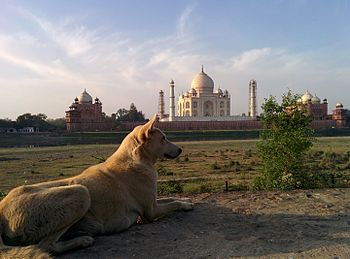 Taj Mahal232.jpg