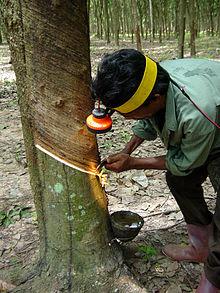 Plantagearbetare som knackar på ett gummiträd