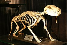 Dingo Natura Dog Food Review
