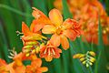 Tatton Park Flower Show 2014 075.jpg