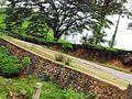 Tea Plantations, wayanad - panoramio (5).jpg