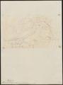 Thamnophilus melanurus - 1855 - Print - Iconographia Zoologica - Special Collections University of Amsterdam - UBA01 IZ16400395.tif