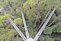 The 30m high structure of The Treetop Walk (19199403090).jpg