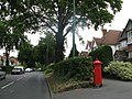 The Beeches Avenue - geograph.org.uk - 897589.jpg