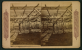 The Big grape vine, Santa Barbara, from Robert N. Dennis collection of stereoscopic views 2.png