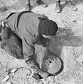 The British Army in Tunisia 1943 NA853.jpg