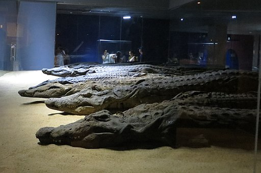 The Crocodile Museum 0283 d1