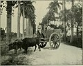 The Cuba review and bulletin (1906) (14786497043).jpg