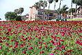 The Flower Fields at Carlsbad Ranch 84 2014-04-28.jpg