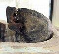 The Nefer-Renepet's mummy, National Museum of Serbia.jpg