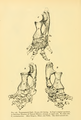 The Osteology of the Reptiles-186 ijhb iuh.png
