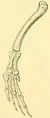 The Osteology of the Reptiles-201 ijuhgv iuhg dfg.png