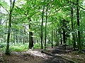 The Royal Forest of Dean 1 - geograph.org.uk - 1431843.jpg