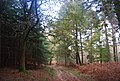 The Wealdway, Five Hundred Acre Wood - geograph.org.uk - 1584987.jpg