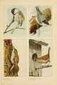 The book of birds (Page 11) (6441654557).jpg