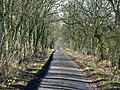 The minor road to Great Bavington - geograph.org.uk - 625969.jpg