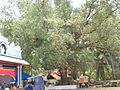 Thiruvan al 4sw.jpg