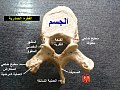 Thoracic vertebrae-ar.jpg
