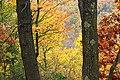 Thousand Step Trail (9) (30674400455).jpg