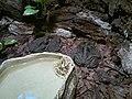 Toads (7822211798).jpg