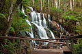 Toorongo falls July09.jpg