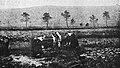 Tourbières du Yeun en 1918 -photo illustrant le texte de Fernand Kerforne-.jpg
