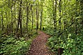 Tourujoki nature trail - path 2.jpg