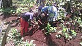 Travail de l'enfant camerounais 03.jpg