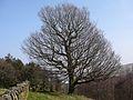 Tree (3382406915).jpg