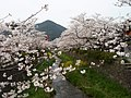 Tree in Yamaguchi.jpg