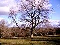Tree in a field - geograph.org.uk - 1189602.jpg