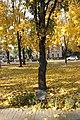 Tree planted by Hero of the Soviet Union Ivan Ivanovich Fesin (1).jpg