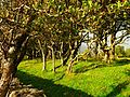 Trees Behind The Wall - panoramio.jpg