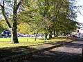 Trees at Tyrone County Hospital, Omagh - geograph.org.uk - 265421.jpg