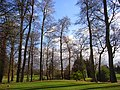 Trees on the golf course, Badgemore - geograph.org.uk - 1067266.jpg