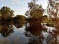 Trees yellow water 5.jpg