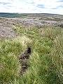 Tributary of Great Espy Sike - geograph.org.uk - 520474.jpg
