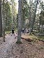 Tyresta forest 03.jpg