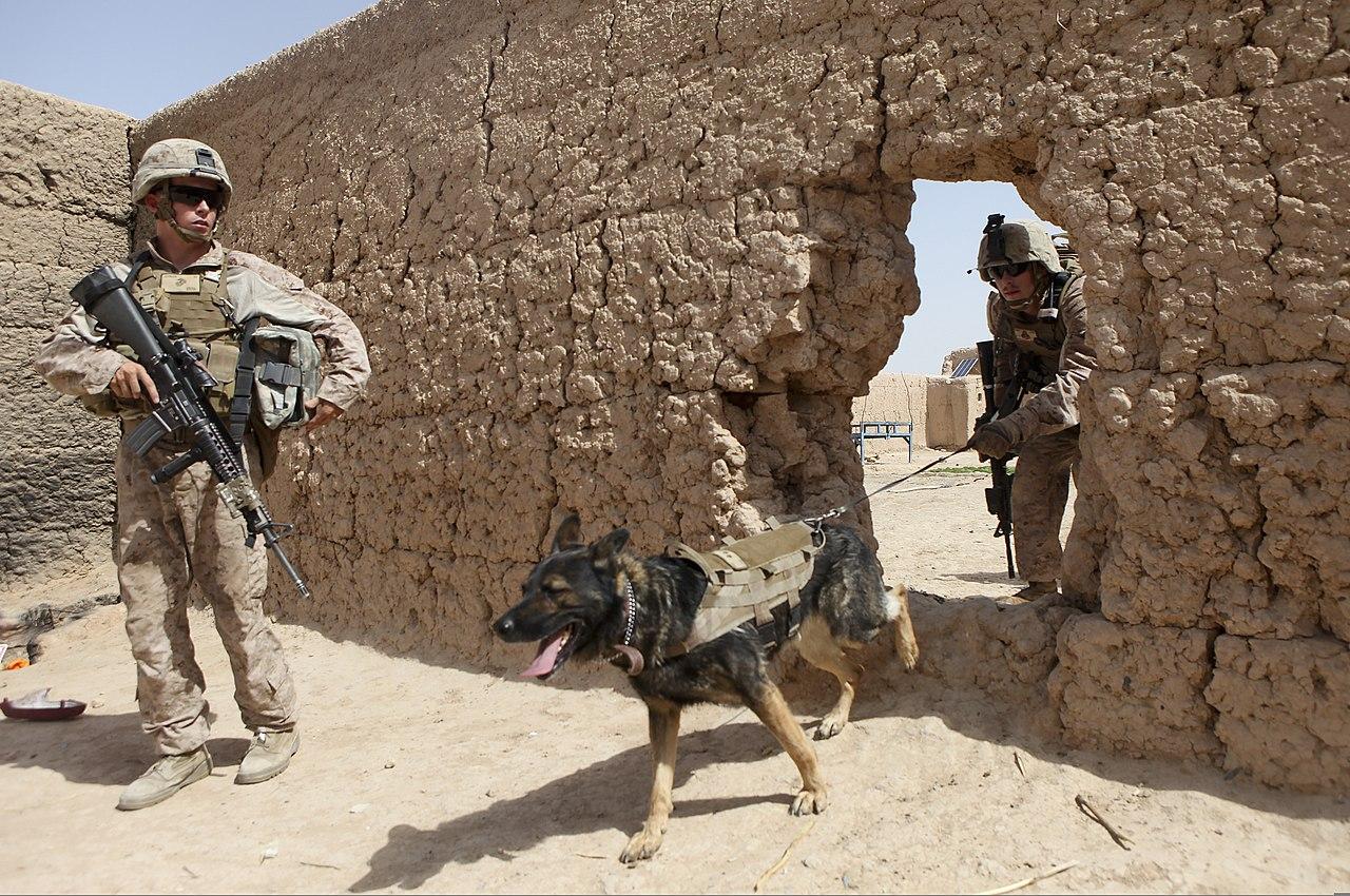 Paws Dog Training