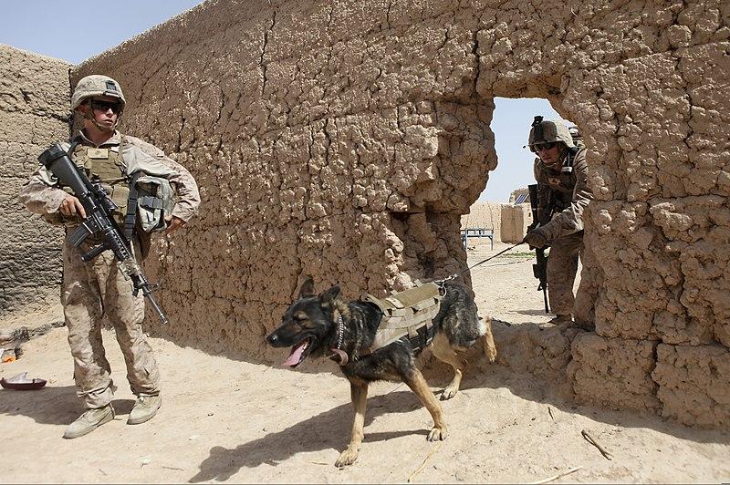 usmc dog handler