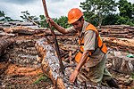 USAID Measuring Impact Conservation Enterprise Retrospective (Guatemala; Rainforest Alliance) (39407128675).jpg